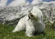 white dog and mountain