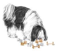 dog smelling dumbells