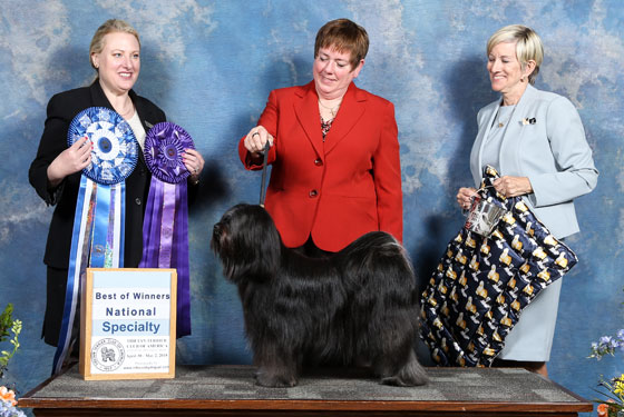 Best of Winners photo with judge and handler