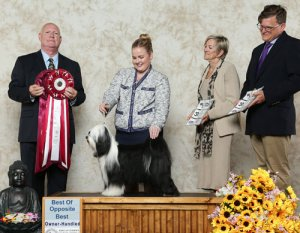 BOS winner photo with judge and handler